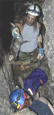 possum rescue at Jennings Cave