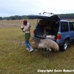 Adam Scherer and the killer emu